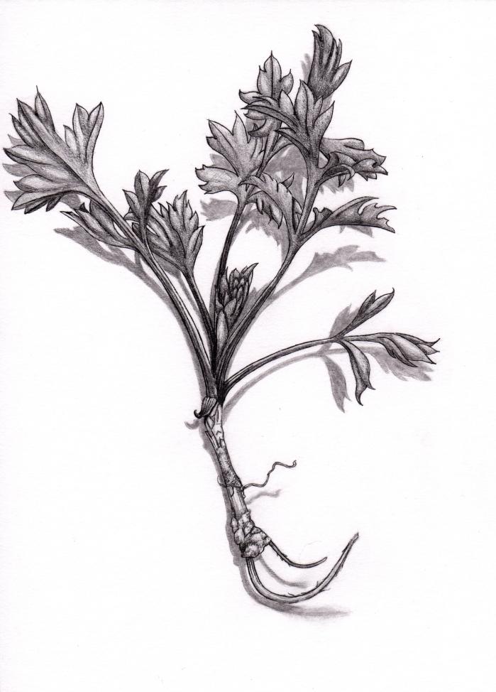 April Drawing 1